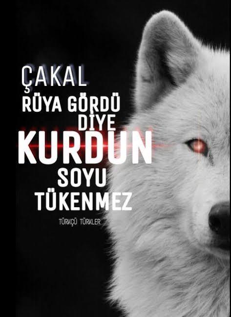 Çakal rüya gördü diye Kurdun soyu tükenmez - Ülkücü İle İlgili Resimli Sözler - Ülkücü Sözleri, Milliyetçilik, Türk Sözleri, resimli-sozler, populer-sozler, mesajlar, anlamli-sozler
