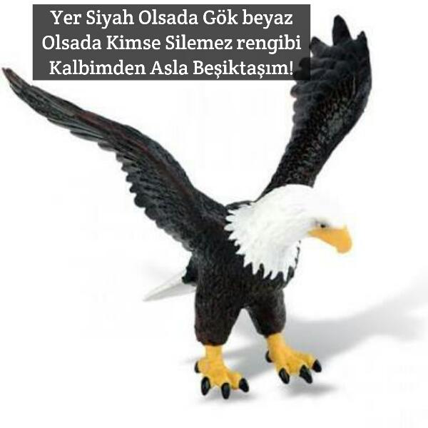 Yer Siyah olsada gök Beyaz olsada kimse silemez rengini kalbimden asla Beşiktaşım - Beşiktaş İle İlgili Resimli Sözler - Beşiktaş Sözleri Ve Kareografileri, resimli-sozler